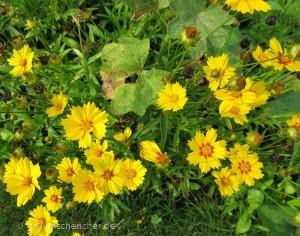 270_gelbe_Blüten_in_L
