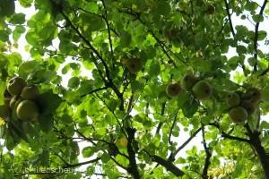 43_Äpfel