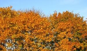 290_Herbstlaub