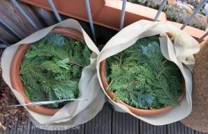 293_abgedeckte_Pflanzen