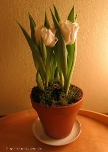 25_weiße_Tulpen