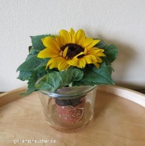 109_Mini_Sonnenblume