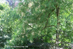 141_U_Bäume