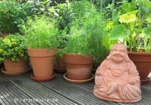 183_Buddha_Dill