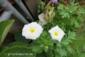 200_weiße_Blume