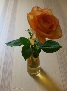 219_Rose