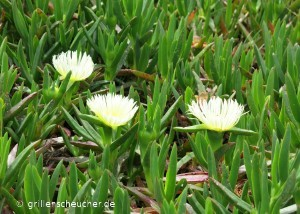 52_Blumen