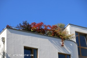 06_Dachterrasse