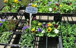 45_Blumen_Wochenmarkt
