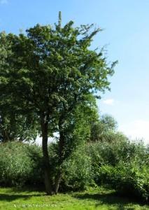 47_Baum