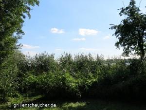 48_Schilf