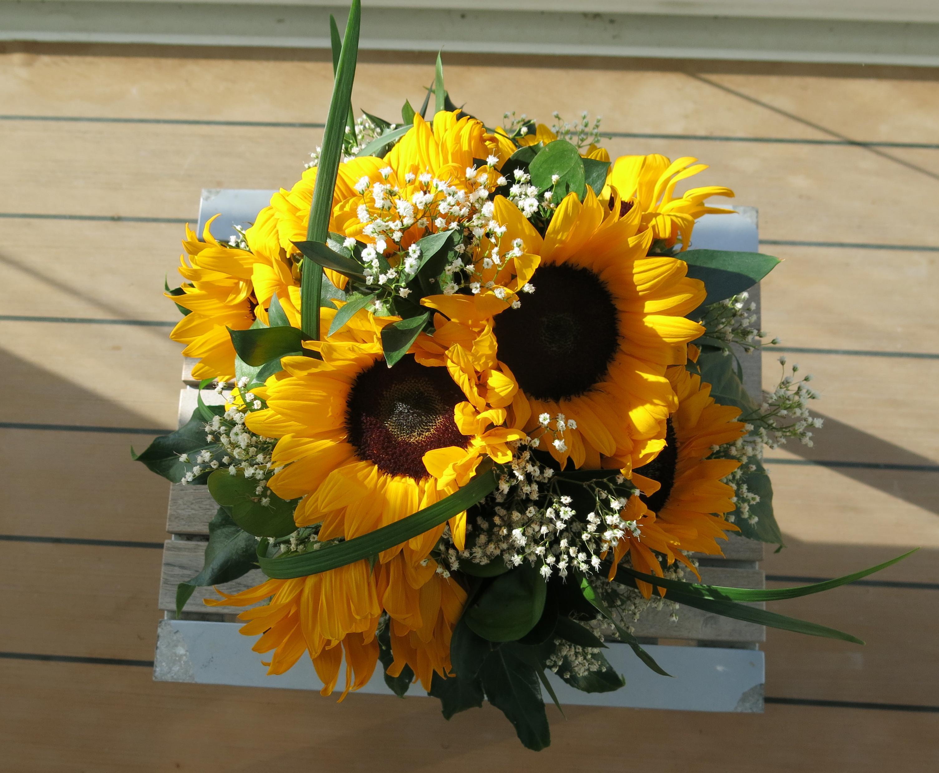 Sonnenblumen Der Grillenscheucher Page 2